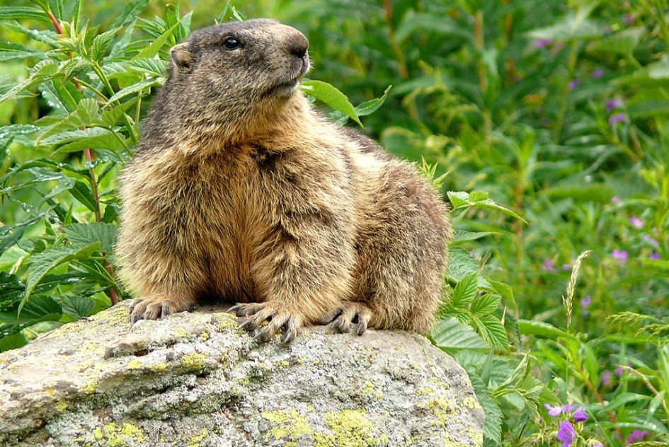 Animals in the Alps - Mountain Animals and Where You Can Find Them