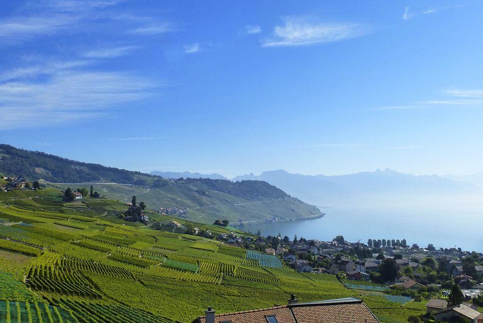 Vineyard Tour Alps
