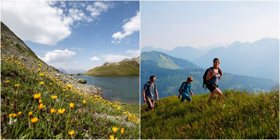Spring in the Alps, apline flowers, hiking, Autumn in the Alps, alpine weather