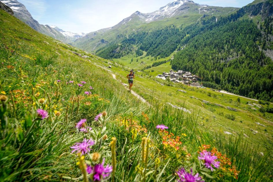 flora and fauna Val d'Isere, flora and fauna Vanoise National Park, Vanoise NAtional Park holiday, alpine flowers in the Alps